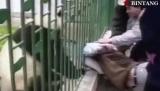 Pandy sú tak milé zvieratká...