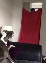 Ako reaguje na zmiznutie človeka pes