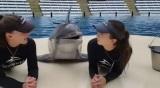Šťastný to delfín