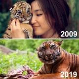 Keď chcete ukázať ako tiger vyrástol a vyjde to inak...