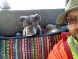 Pes vie kedy ide k veterinárovi