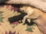 Doslova strážny pes