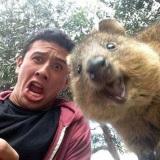 Nov� trend v Austr�lii - selfie s Quokkou