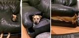 Keď vie, že nesmie ísť na gauč...