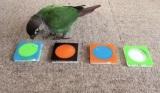 Chcete vidieť ako vták triedi farby?